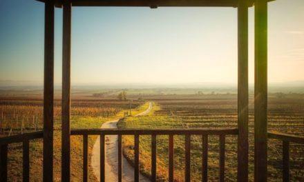 """""""tut gut"""" Wanderweg Fels am Wagram – Route 2: Über den Hammergraben zur Felser Warte"""