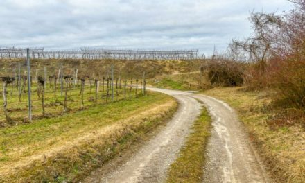 Der Weinberg-Wanderweg in Gedersdorf