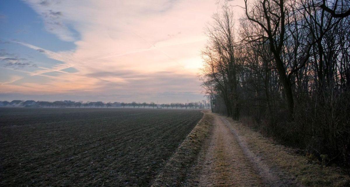 Die Au-Runde in Rohrendorf