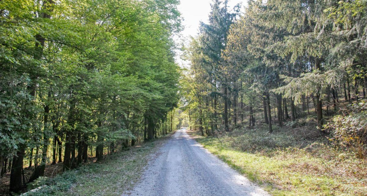 Kremser Rieden- und Wanderkarte – Wanderung 10: Waldhofweg