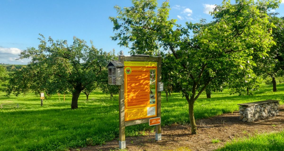 Der Wachauer Marillen-Erlebnisweg in Krems-Angern