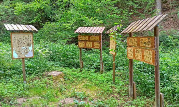 Der Alois-Scholz-Naturlehrpfad im Reisperbachtal bei Krems-Stein