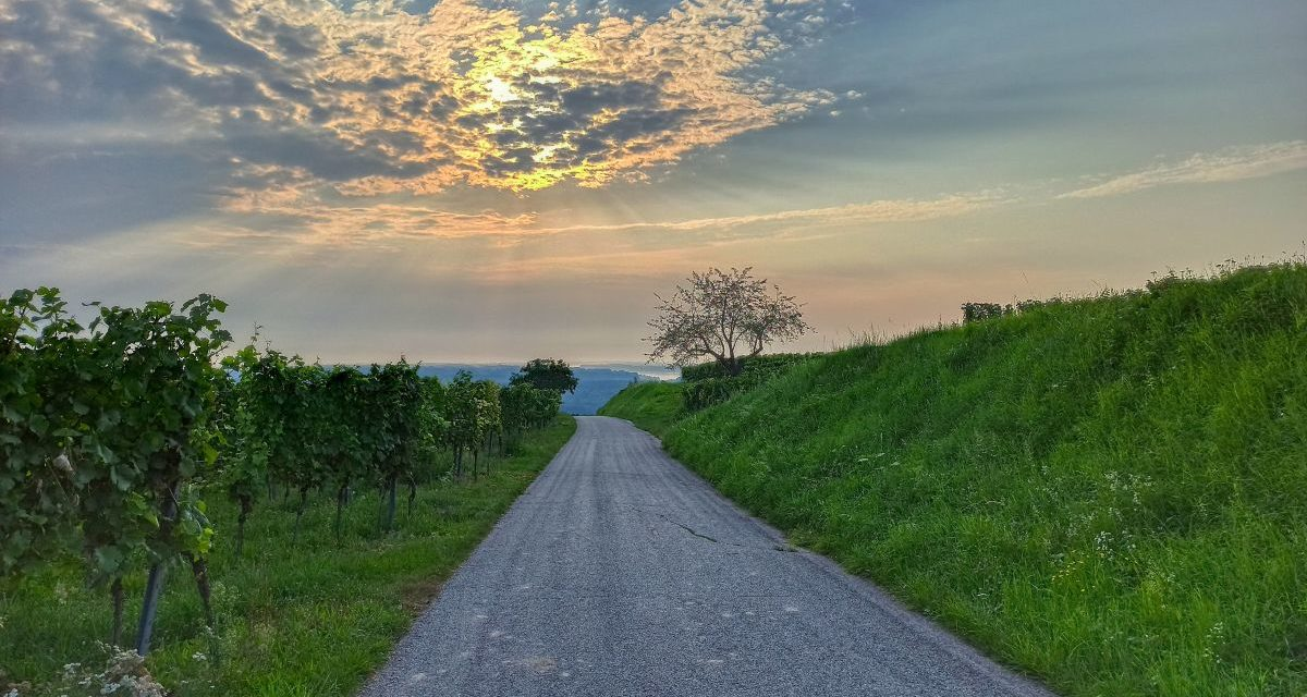 Der Weinberg-Rundwanderweg in Hollenburg