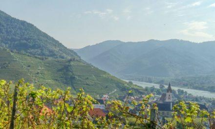 Der Weingeistweg – ein Kinderwanderweg in Spitz (frühere Wegführung!)