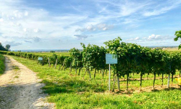 Der Weinlehrpfad bei der Kellergasse am Eichberg
