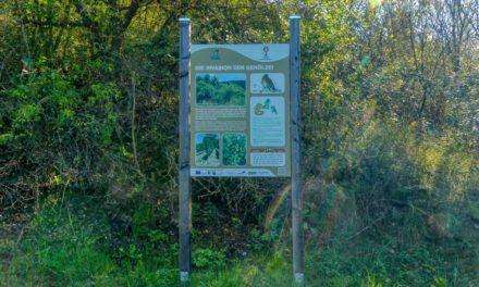 Der Waldentdeckungspfad im Naturpark Kamptal – Schönberg