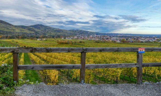 Lauf- und Nordic-Walking-Zentrum Wachau – Strecke 2: Süßenberg