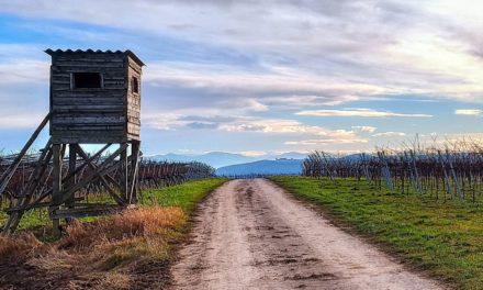 Weitwanderweg Kremstal-Donau 10: Lengenfeld – Stratzing