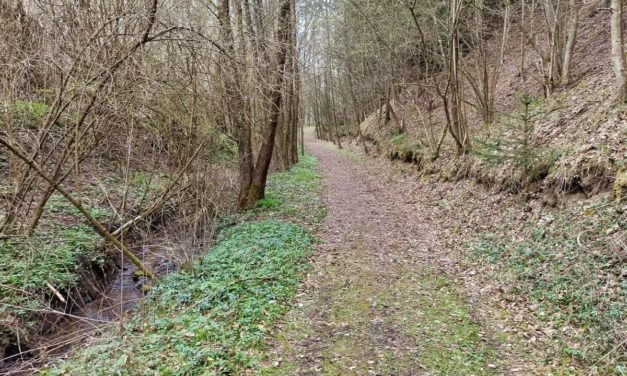 Der Lengenfelder Feen-Waldweg