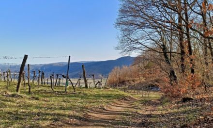 Rundwanderung von Weißenkirchen über die Schildhütten und den Schildbachgraben