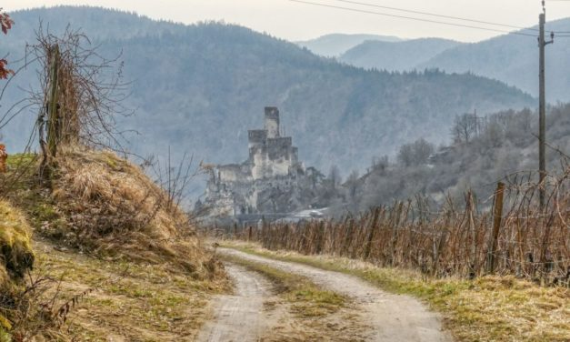 Senftenberger Wanderweg Nr. 12: Weinwanderweg