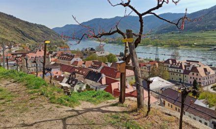 Der Weingeistweg – ein Kinderwanderweg in Spitz (aktuelle Wegführung!)