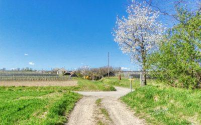 """""""tut gut"""" Wanderweg Fels am Wagram – Route 1"""