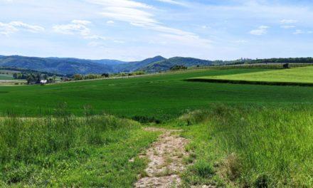 Krustettner Weinrieden Wanderwege: Kirchensteig