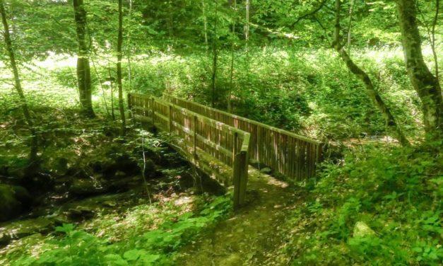 Der Weiherbach-Weg in Bad Schwanberg